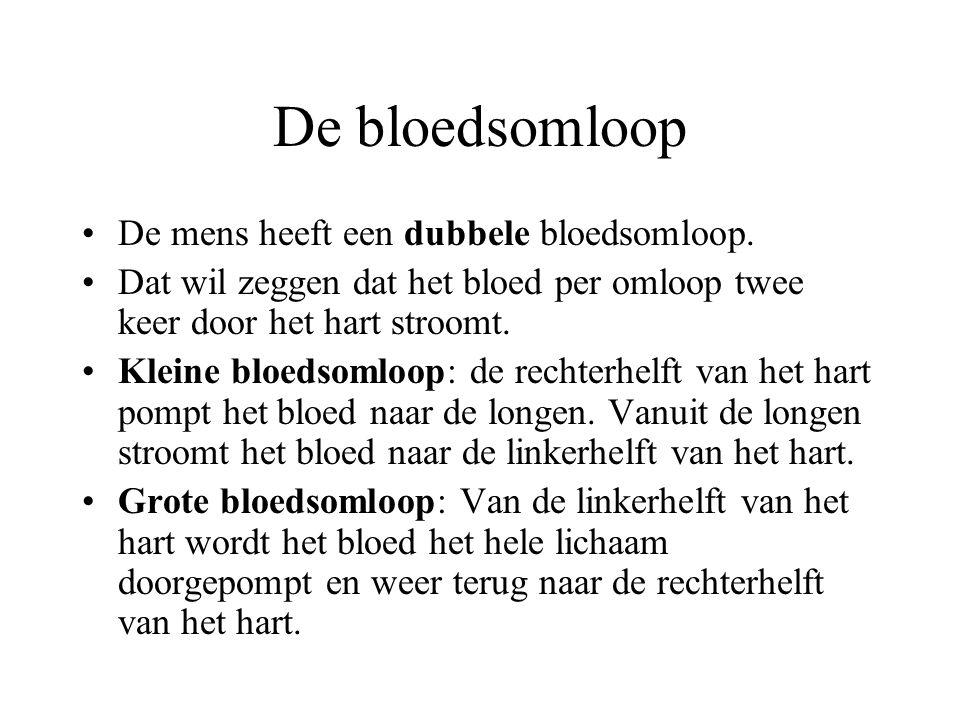 De bloedsomloop De mens heeft een dubbele bloedsomloop.