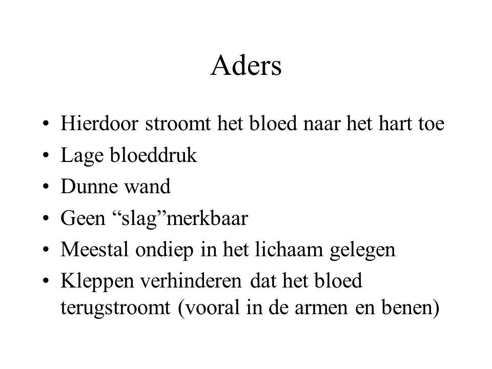 Aders Hierdoor stroomt het bloed naar het hart toe Lage bloeddruk Dunne wand Geen slag merkbaar Meestal ondiep in het lichaam gelegen Kleppen verhinderen dat het bloed terugstroomt (vooral in de armen en benen)
