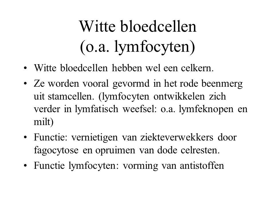 Witte bloedcellen (o.a. lymfocyten) Witte bloedcellen hebben wel een celkern.