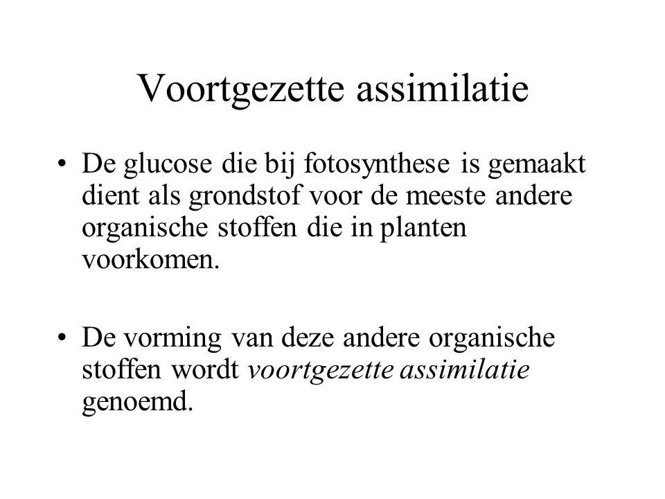 Voortgezette assimilatie De glucose die bij fotosynthese is gemaakt dient als grondstof voor de meeste andere organische stoffen die in planten voorko