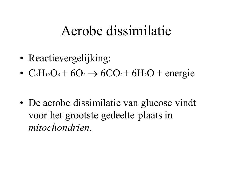 Aerobe dissimilatie Reactievergelijking: C 6 H 12 O 6 + 6O 2  6CO 2 + 6H 2 O + energie De aerobe dissimilatie van glucose vindt voor het grootste ged