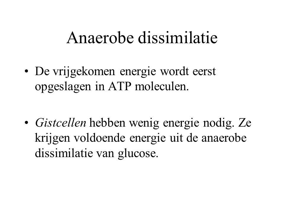 Anaerobe dissimilatie De vrijgekomen energie wordt eerst opgeslagen in ATP moleculen. Gistcellen hebben wenig energie nodig. Ze krijgen voldoende ener