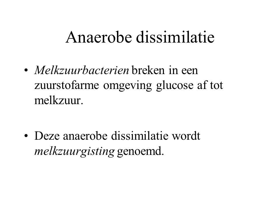 Anaerobe dissimilatie Melkzuurbacterien breken in een zuurstofarme omgeving glucose af tot melkzuur. Deze anaerobe dissimilatie wordt melkzuurgisting