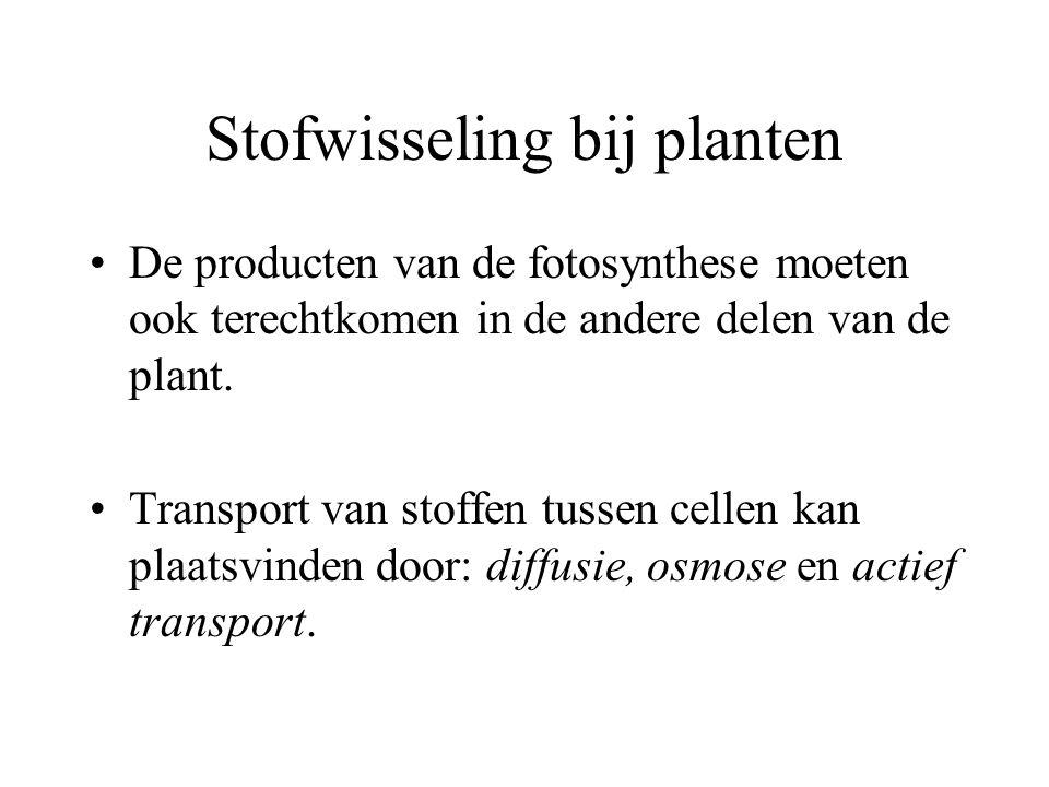 Stofwisseling bij planten De producten van de fotosynthese moeten ook terechtkomen in de andere delen van de plant. Transport van stoffen tussen celle