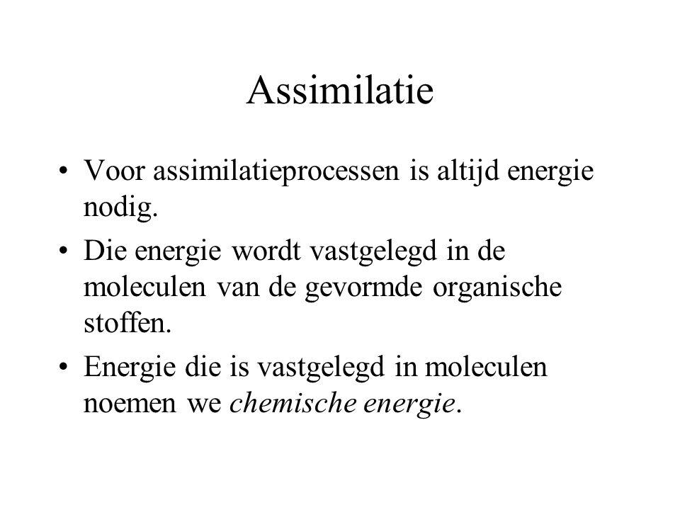 Assimilatie Voor assimilatieprocessen is altijd energie nodig. Die energie wordt vastgelegd in de moleculen van de gevormde organische stoffen. Energi