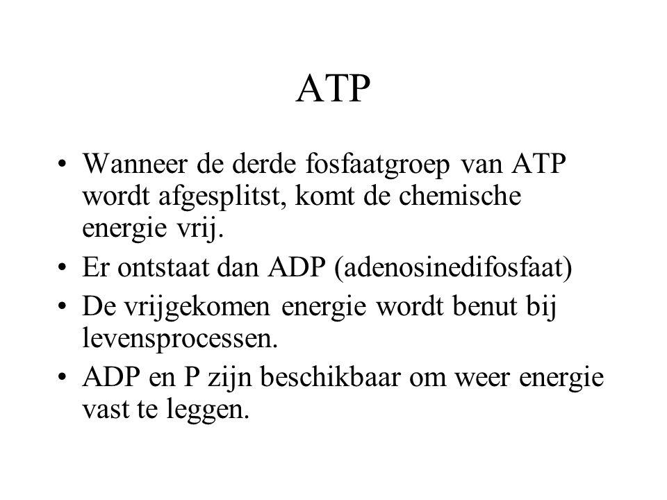 ATP Wanneer de derde fosfaatgroep van ATP wordt afgesplitst, komt de chemische energie vrij. Er ontstaat dan ADP (adenosinedifosfaat) De vrijgekomen e