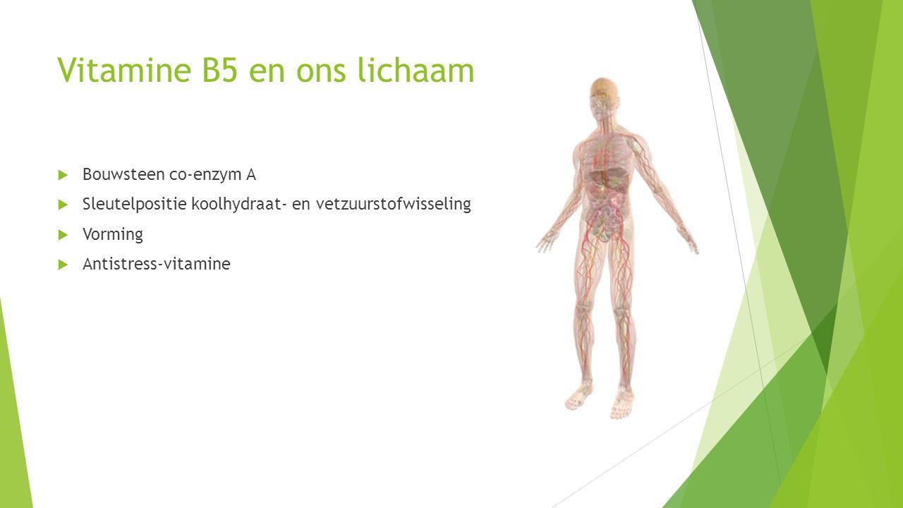 Vitamine B5 en ons lichaam  Bouwsteen co-enzym A  Sleutelpositie koolhydraat- en vetzuurstofwisseling  Vorming  Antistress-vitamine
