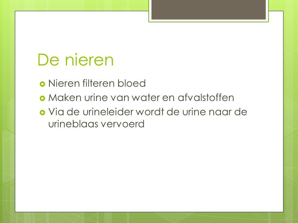 De nieren  Nieren filteren bloed  Maken urine van water en afvalstoffen  Via de urineleider wordt de urine naar de urineblaas vervoerd