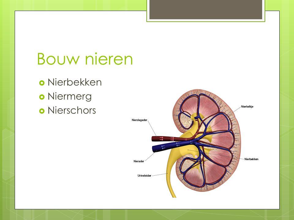 Nierschors  De buitenste laag van de nier  Plek waar urine wordt gevormd