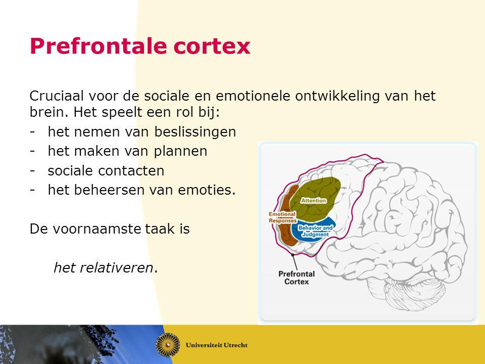Prefrontale cortex Cruciaal voor de sociale en emotionele ontwikkeling van het brein. Het speelt een rol bij: -het nemen van beslissingen -het maken v