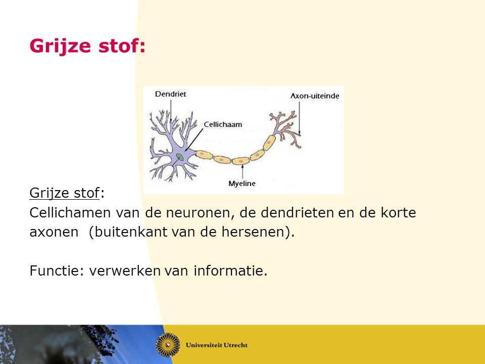 Grijze stof: Cellichamen van de neuronen, de dendrieten en de korte axonen (buitenkant van de hersenen). Functie: verwerken van informatie.