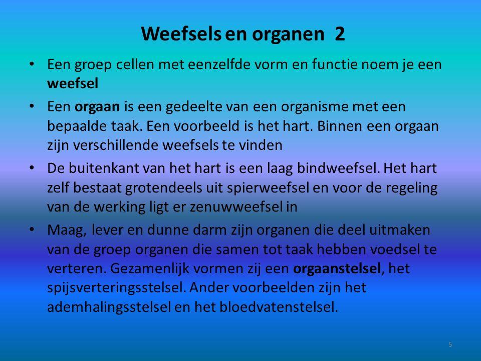 Weefsels en organen 2 Een groep cellen met eenzelfde vorm en functie noem je een weefsel Een orgaan is een gedeelte van een organisme met een bepaalde taak.