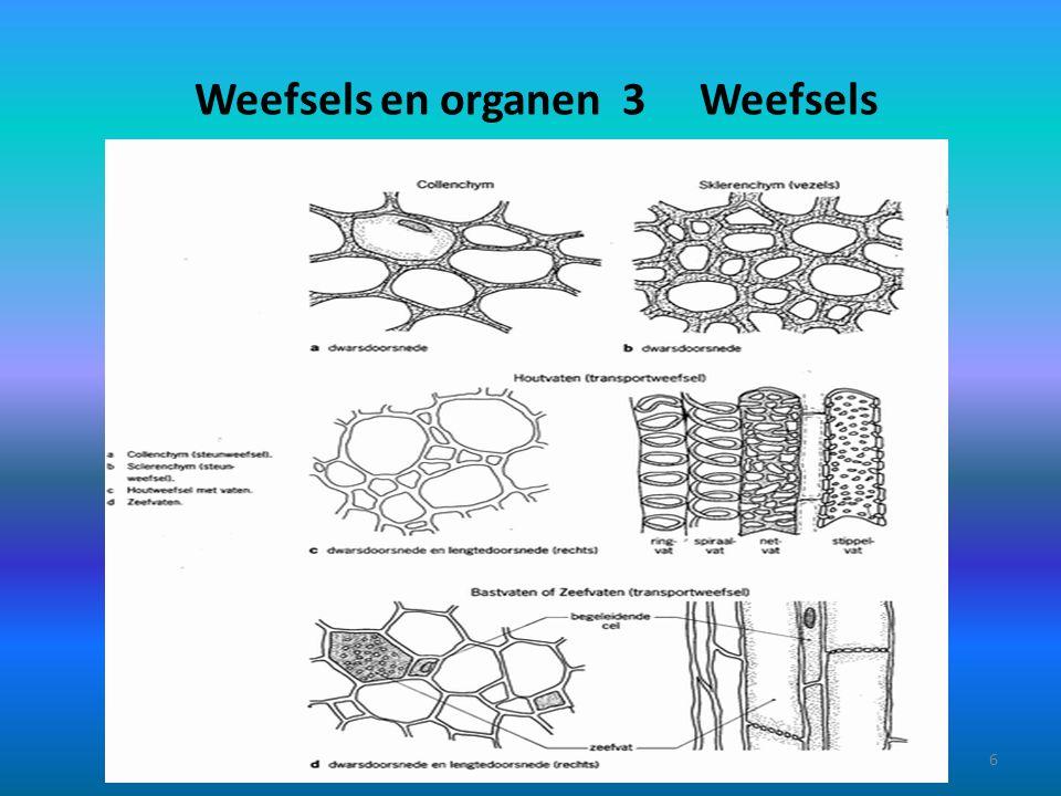 Weefsels en organen 4 Weefsels Beencellen Kraakbeencellen en tussencelstof en tussencelstof 7