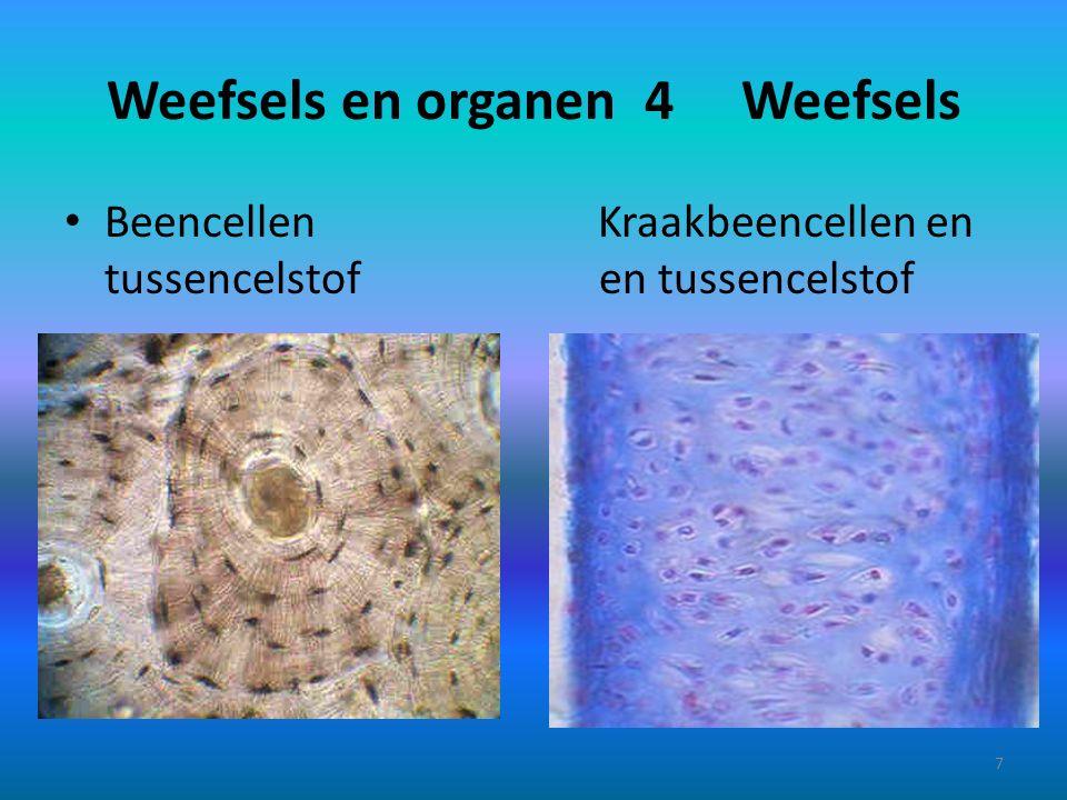 Weefsels en organen 5 8
