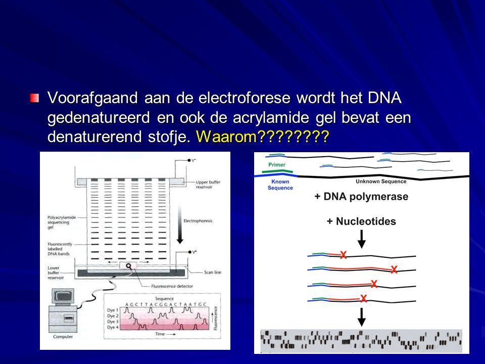 Voorafgaand aan de electroforese wordt het DNA gedenatureerd en ook de acrylamide gel bevat een denaturerend stofje.