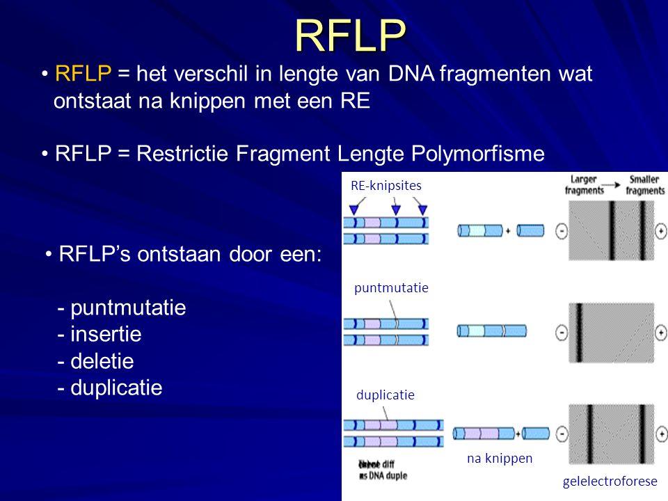 RFLP RFLP = het verschil in lengte van DNA fragmenten wat ontstaat na knippen met een RE RFLP = Restrictie Fragment Lengte Polymorfisme RFLP's ontstaan door een: - puntmutatie - insertie - deletie - duplicatie RE-knipsites puntmutatie duplicatie na knippen gelelectroforese
