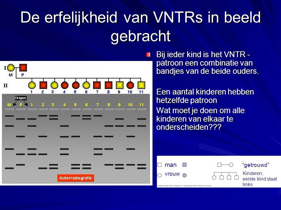 De erfelijkheid van VNTRs in beeld gebracht Bij ieder kind is het VNTR - patroon een combinatie van bandjes van de beide ouders.