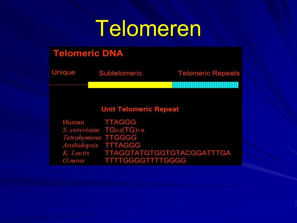 Persoonlijke DNA profielen