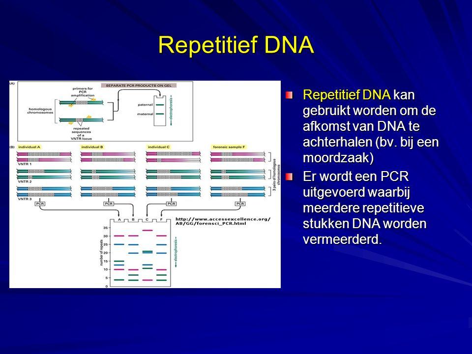 Repetitief DNA Repetitief DNA kan gebruikt worden om de afkomst van DNA te achterhalen (bv.