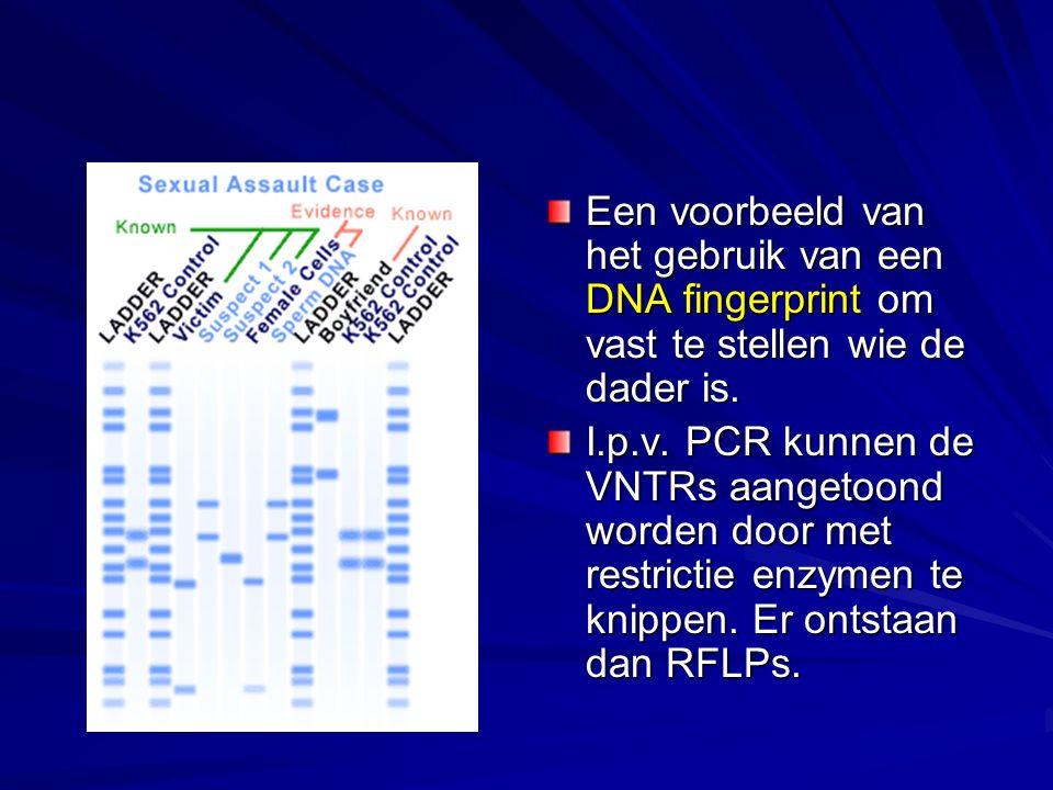 Een voorbeeld van het gebruik van een DNA fingerprint om vast te stellen wie de dader is.