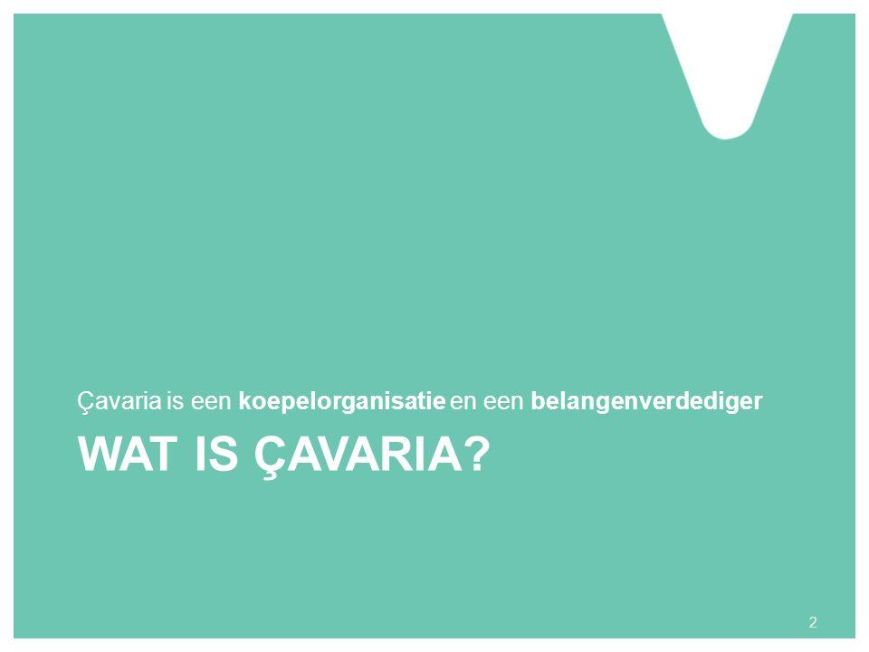 WAT IS ÇAVARIA Çavaria is een koepelorganisatie en een belangenverdediger 2