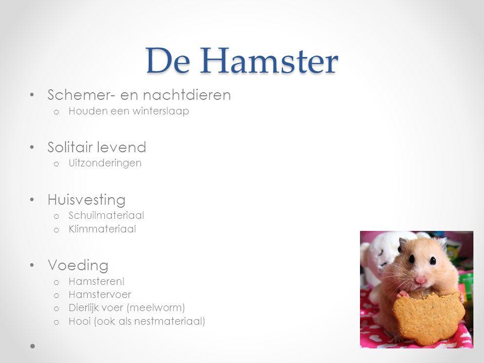 De Hamster Schemer- en nachtdieren o Houden een winterslaap Solitair levend o Uitzonderingen Huisvesting o Schuilmateriaal o Klimmateriaal Voeding o Hamsteren.