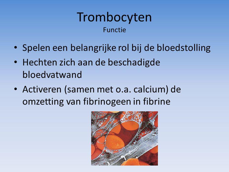 Trombocyten Functie Spelen een belangrijke rol bij de bloedstolling Hechten zich aan de beschadigde bloedvatwand Activeren (samen met o.a.