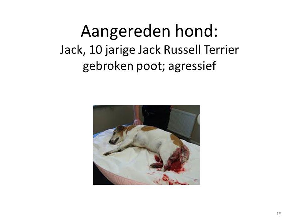 Aangereden hond: Jack, 10 jarige Jack Russell Terrier gebroken poot; agressief 18