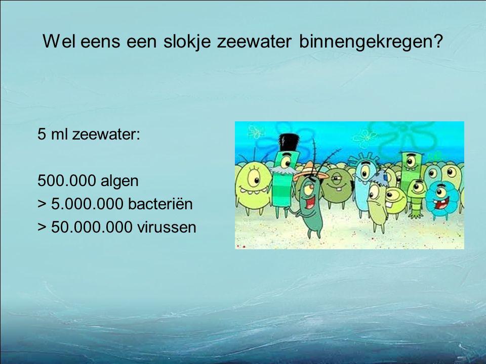 5 ml zeewater: 500.000 algen > 5.000.000 bacteriën > 50.000.000 virussen Wel eens een slokje zeewater binnengekregen?