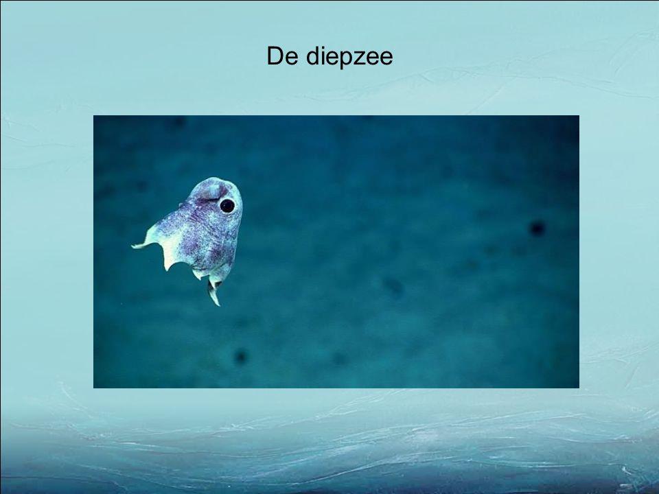 De diepzee