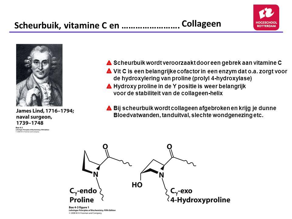 Scheurbuik wordt veroorzaakt door een gebrek aan vitamine C Vit C is een belangrijke cofactor in een enzym dat o.a. zorgt voor de hydroxylering van pr