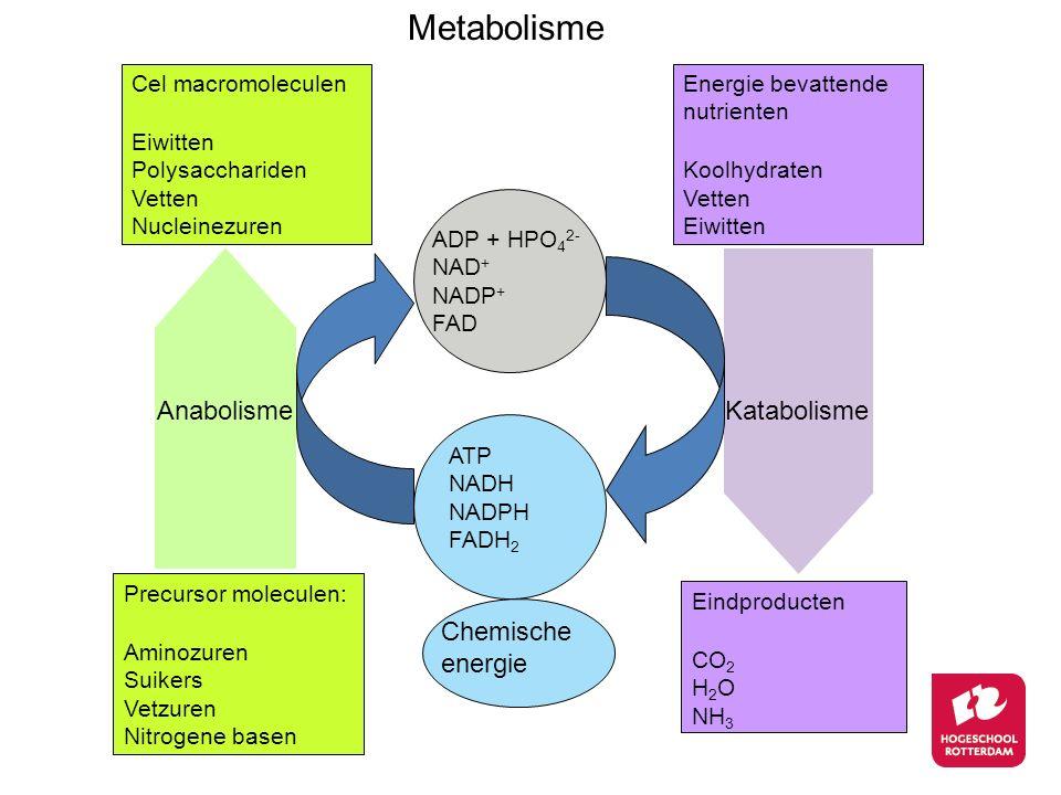 Cel macromoleculen Eiwitten Polysacchariden Vetten Nucleinezuren Precursor moleculen: Aminozuren Suikers Vetzuren Nitrogene basen Energie bevattende n