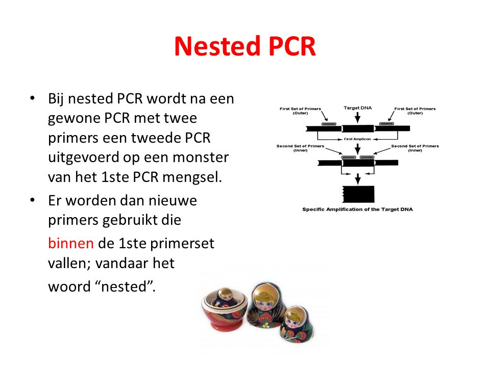 Nested PCR Door nested PCR verhoog je de specificiteit van de reactie en de gevoeligheid.