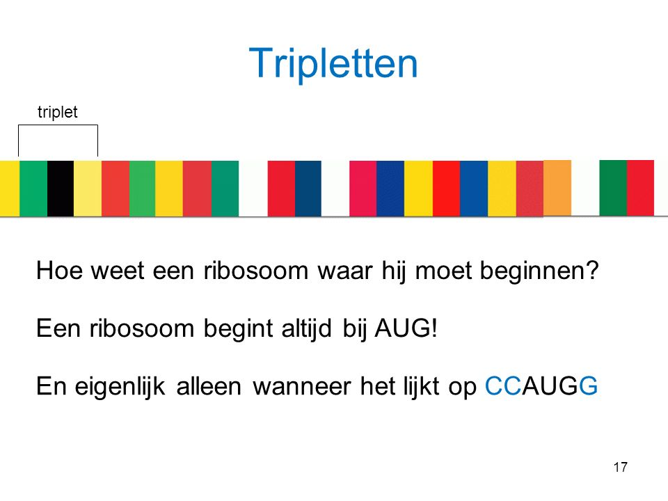 Tripletten 17 triplet Hoe weet een ribosoom waar hij moet beginnen? Een ribosoom begint altijd bij AUG! En eigenlijk alleen wanneer het lijkt op CCAUG