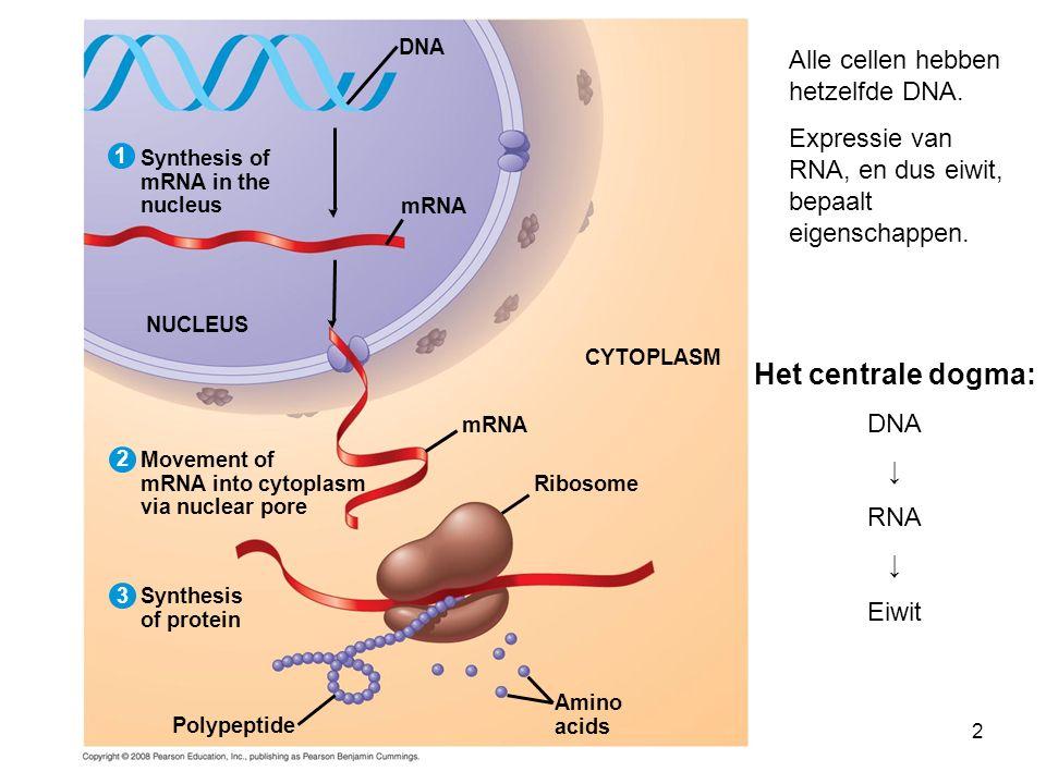 23 Translocatie Bij chronische myeloide leukemie (CML)