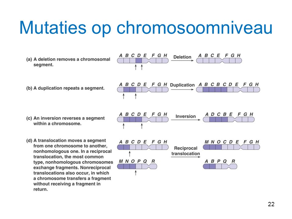 22 Mutaties op chromosoomniveau