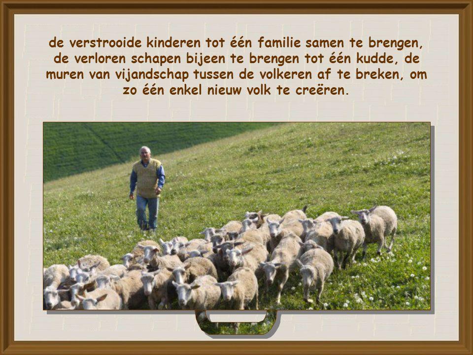 De geschiedenis kent een nieuw begin met Noach, met de keuze van Abraham, met de geboorte van het uitverkoren volk.