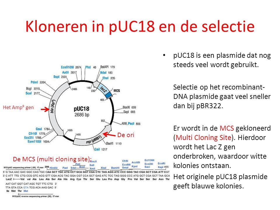 Kloneren in pUC18 en de selectie pUC18 is een plasmide dat nog steeds veel wordt gebruikt. Selectie op het recombinant- DNA plasmide gaat veel sneller