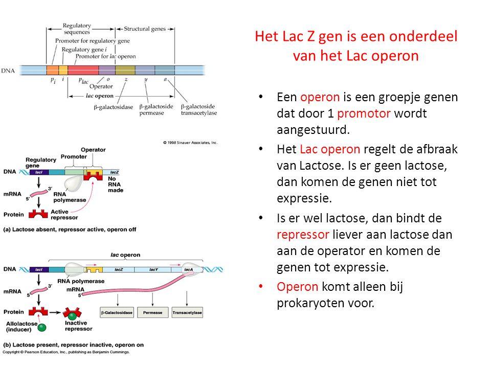 Het Lac Z gen is een onderdeel van het Lac operon Een operon is een groepje genen dat door 1 promotor wordt aangestuurd. Het Lac operon regelt de afbr