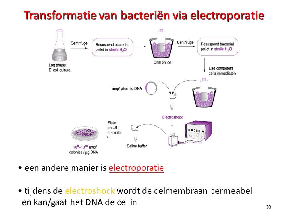 30 Transformatie van bacteriën via electroporatie een andere manier is electroporatie tijdens de electroshock wordt de celmembraan permeabel en kan/ga