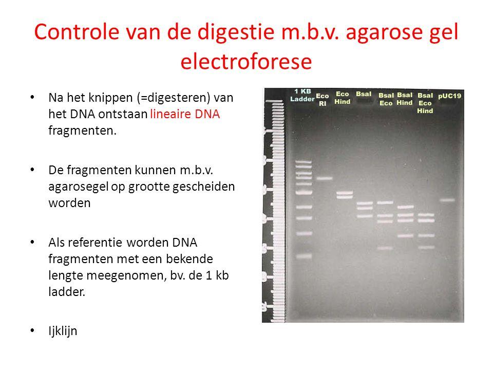 Controle van de digestie m.b.v. agarose gel electroforese Na het knippen (=digesteren) van het DNA ontstaan lineaire DNA fragmenten. De fragmenten kun
