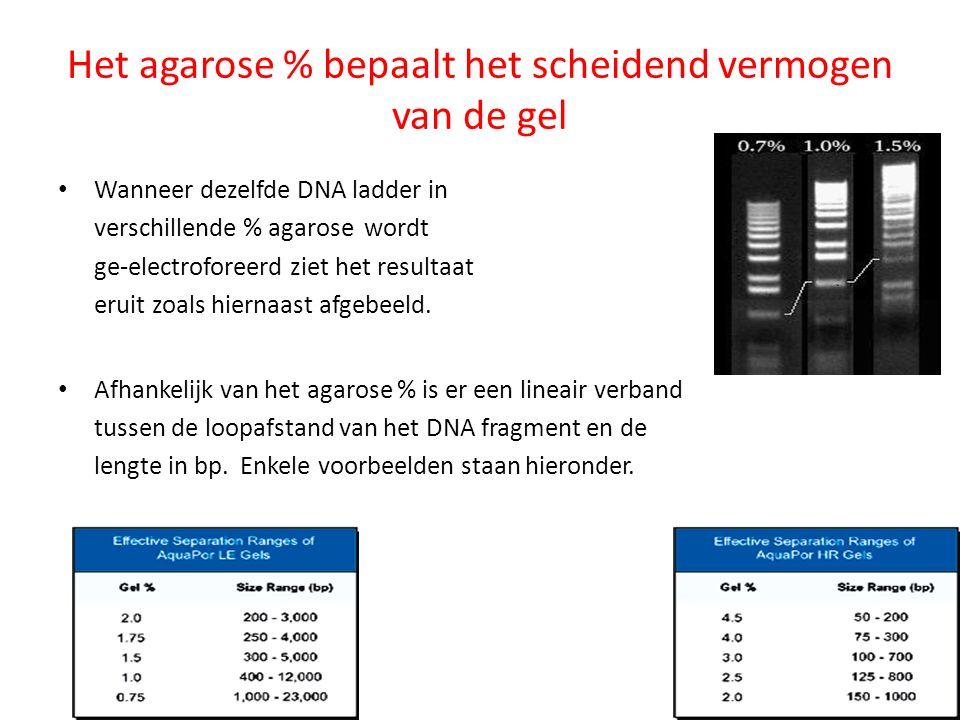 Het agarose % bepaalt het scheidend vermogen van de gel Wanneer dezelfde DNA ladder in verschillende % agarose wordt ge-electroforeerd ziet het result