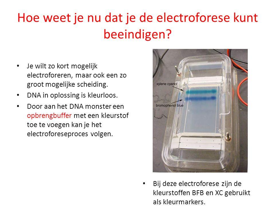 Hoe weet je nu dat je de electroforese kunt beeindigen? Je wilt zo kort mogelijk electroforeren, maar ook een zo groot mogelijke scheiding. DNA in opl