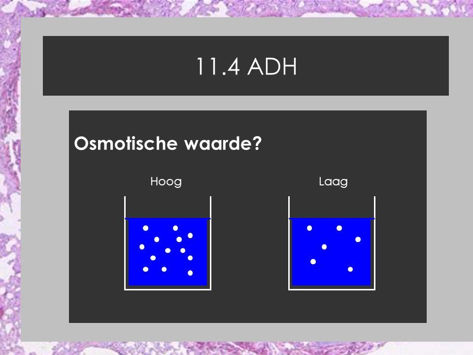 11.4 ADH Osmotische waarde? HoogLaag