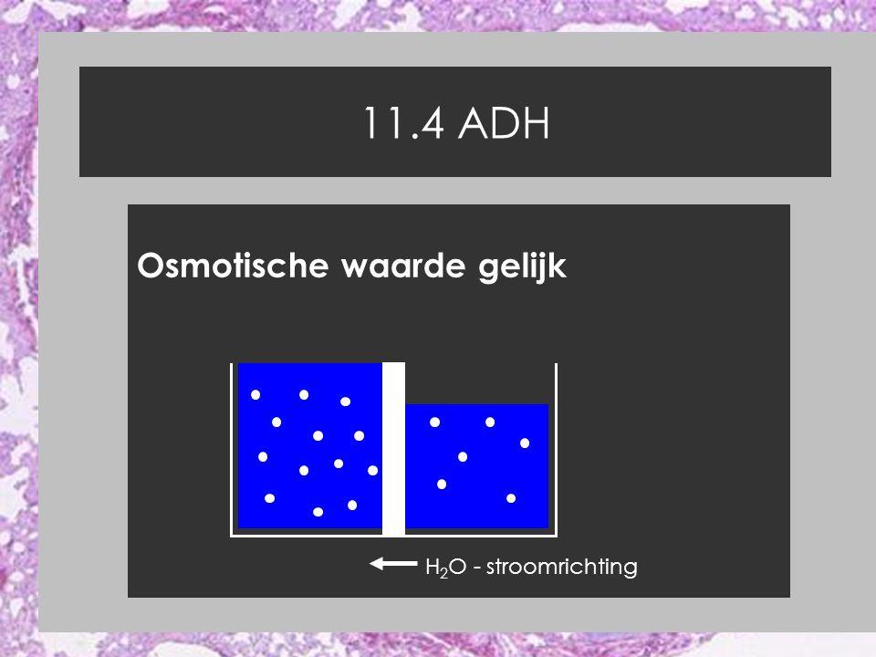 11.4 ADH Osmotische waarde gelijk H 2 O - stroomrichting