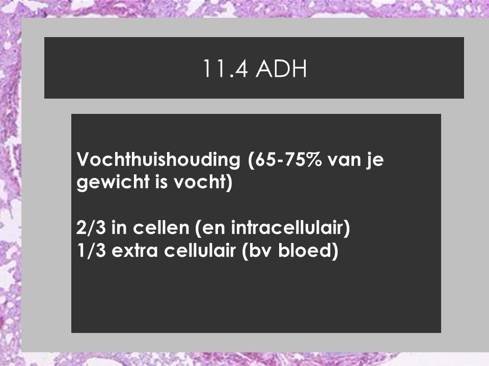 11.4 ADH Vochthuishouding (65-75% van je gewicht is vocht) 2/3 in cellen (en intracellulair) 1/3 extra cellulair (bv bloed)