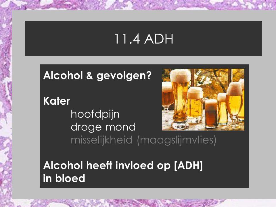 11.4 ADH Alcohol & gevolgen? Kater hoofdpijn droge mond misselijkheid (maagslijmvlies) Alcohol heeft invloed op [ADH] in bloed