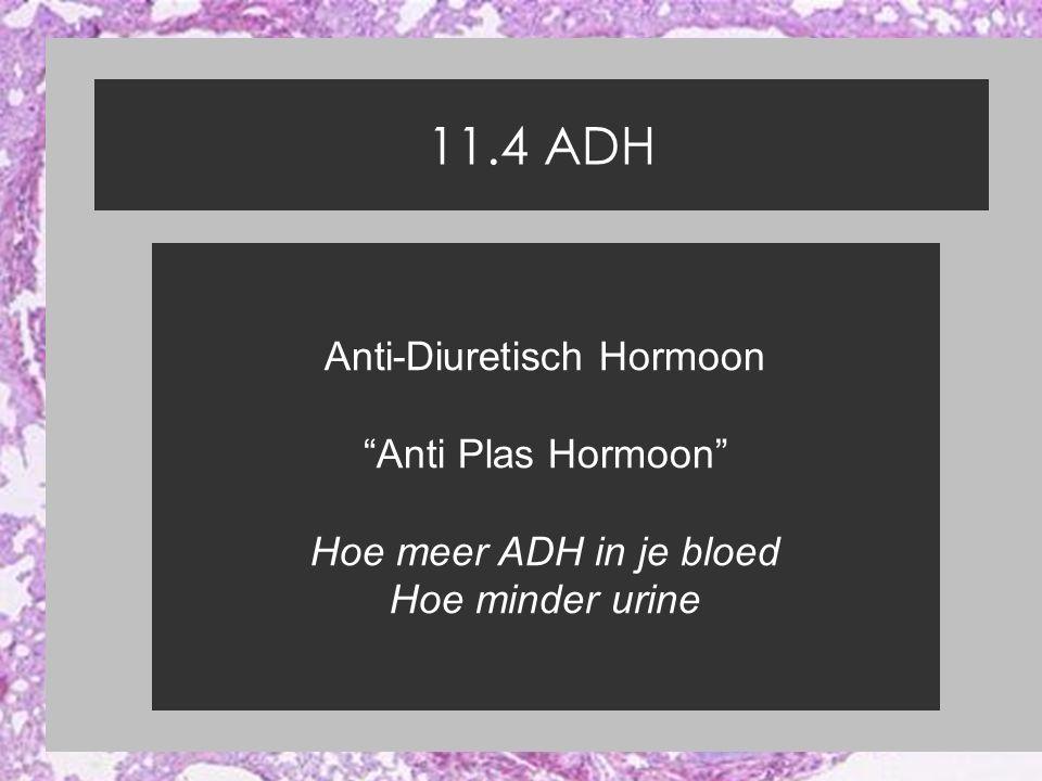 11.4 ADH Anti-Diuretisch Hormoon Anti Plas Hormoon Hoe meer ADH in je bloed Hoe minder urine