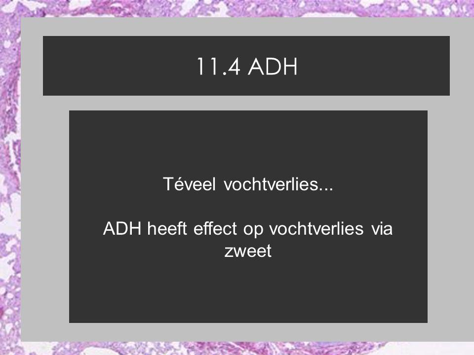 11.4 ADH Téveel vochtverlies... ADH heeft effect op vochtverlies via zweet