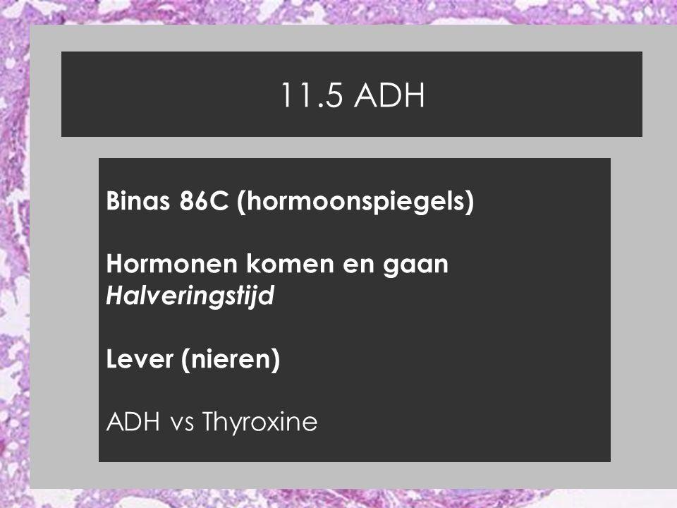 11.5 ADH Binas 86C (hormoonspiegels) Hormonen komen en gaan Halveringstijd Lever (nieren) ADH vs Thyroxine
